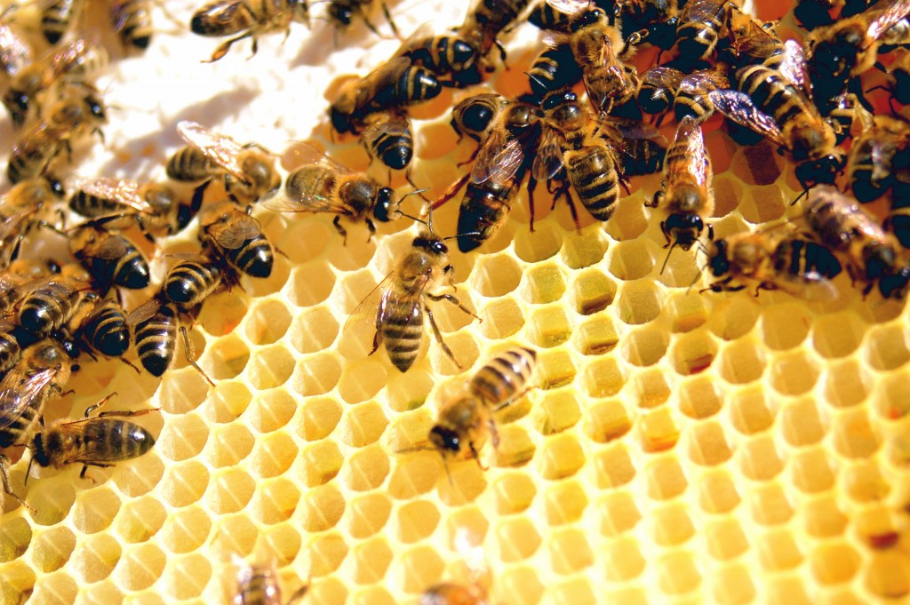 Méhpempő és más méhészeti termékek